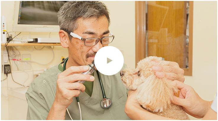 """""""世界一の動物病院""""を目指すもみの木動物病院の取り組み"""