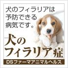犬のフィラリア症